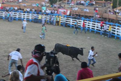 Santa Rosa - loose bull