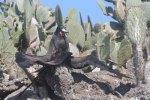 Frigatebird doing yoga