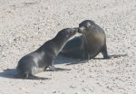 Baby and juvenile sea lion
