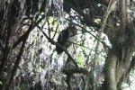 Barn owl in the shadows