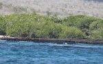 Egret colony