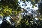 View of thick forest canopy