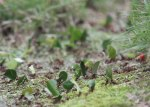 Hard-working Leafcutter Ants