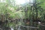 Swampy area near creek