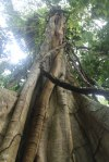 Tall trees everywhere!