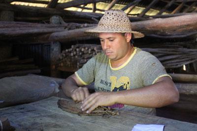 Making a cigar