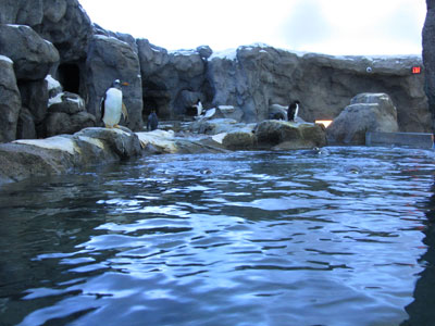 Indoor penguin pool