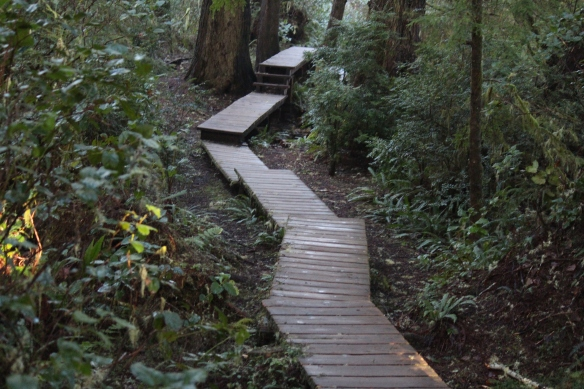 Schooner Cove boardwalk through old growth rainforest