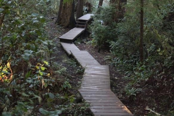 Schooner Cove boardwalk through old growth rainforest