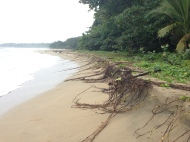 More evidence of erosion along the beaches near Puerto Viejo.